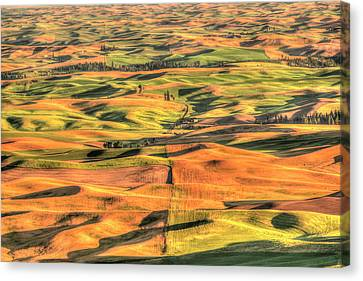 Aerial View Of Summer Wheat, Barley Canvas Print by Stuart Westmorland