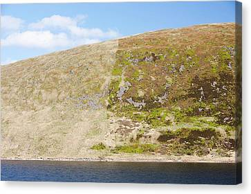 Affect Of Grazing On Moorland Vegetation Canvas Print
