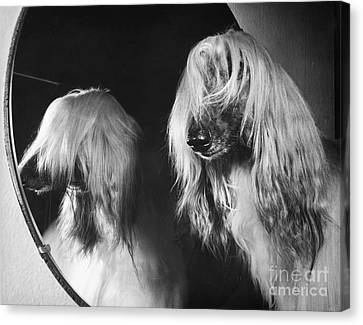 Afghan Hound Canvas Print by ME Browning