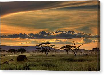 Africa Canvas Print by Amnon Eichelberg