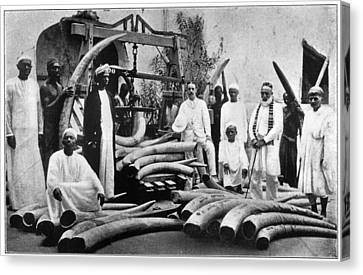 Africa Ivory Trade, C1900 Canvas Print by Granger