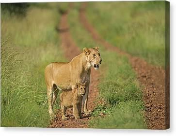 Africa, Lioness And Cub Canvas Print