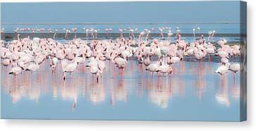 Africa, Namibia, Walvis Bay Canvas Print