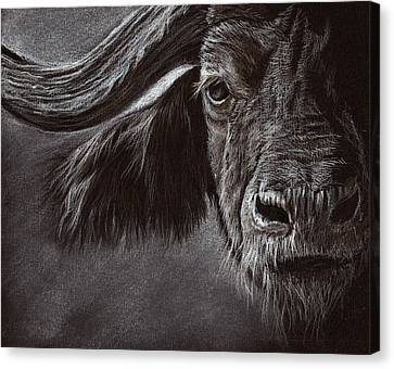 Canvas Print featuring the drawing African Buffalo by Heidi Kriel