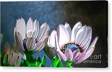 African Daisy Detail Canvas Print by Donna Brown