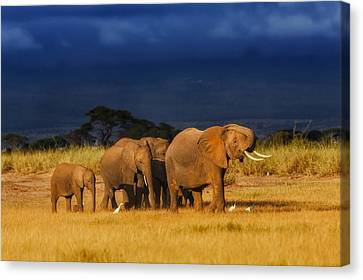 African Elephant Herd Canvas Print