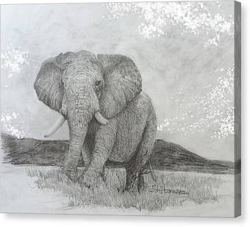 African Elephant Canvas Print by Jim Hubbard