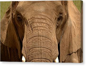 Canvas Print featuring the photograph African Elephant by Nadalyn Larsen
