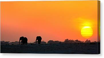 Canvas Print featuring the photograph African Elephant Sunset by Amanda Stadther