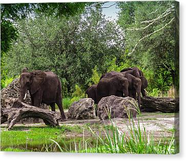 African Elephants  Canvas Print by Zina Stromberg