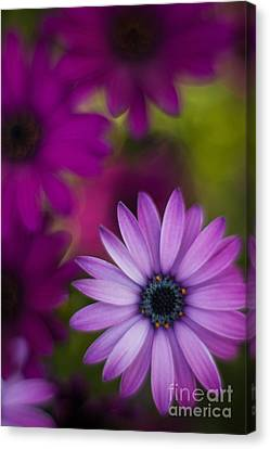 Painterly Canvas Print - African Gerbera Standout by Mike Reid