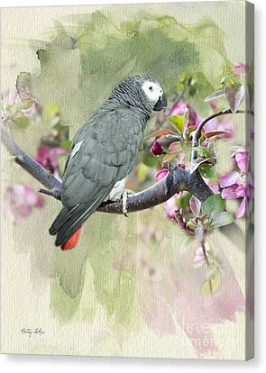 African Gray Among The Blossoms Canvas Print by Betty LaRue