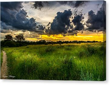 African Meadow Canvas Print by Andrew Matwijec