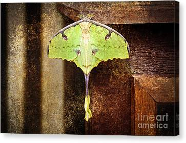 African Moon Moth 2 Canvas Print by Andee Design