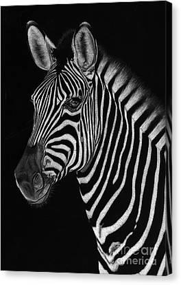 African Stallion Canvas Print by Sheryl Unwin