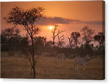 African Sunrise Canvas Print by Craig Brown