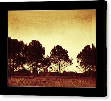 African Sunset Secrecy Canvas Print by Ernestine Manowarda