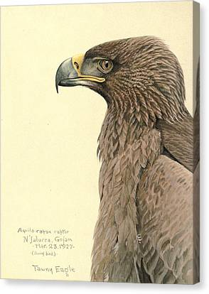 African Tawny Eagle Canvas Print by Rob Dreyer