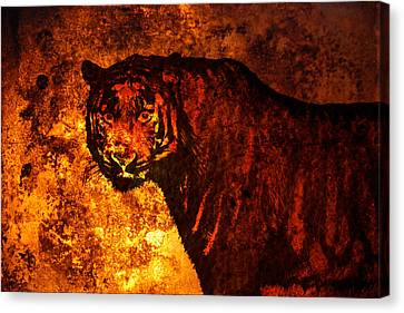 African Tiger  Canvas Print by Tommytechno Sweden