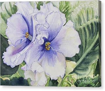 African Violet Canvas Print by Carol Flagg
