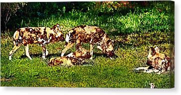 African Wild Dog Family Canvas Print by Miroslava Jurcik