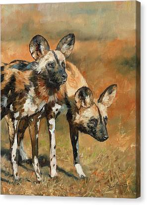 Canvas Print - African Wild Dogs by David Stribbling