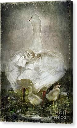 After A Stormy Night Canvas Print by Adelita Rog