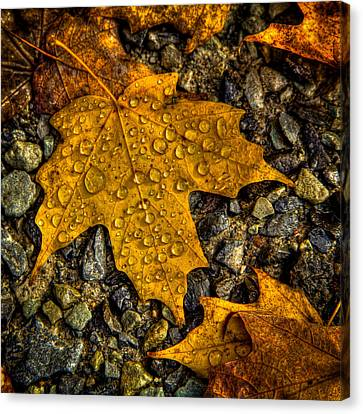 Autumn Leaf On Water Canvas Print - After An Autumn Rain by David Patterson
