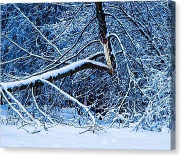 After The Icy Rain - Featured 3 Canvas Print by Alexander Senin