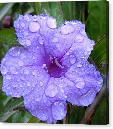 Canvas Print featuring the photograph After The Rain #1 by Robert ONeil