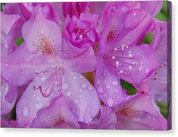 Canvas Print featuring the photograph After The Rain by Aimee L Maher Photography and Art Visit ALMGallerydotcom