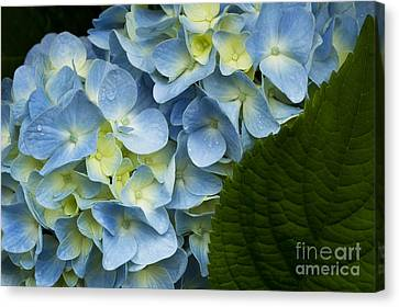 Canvas Print featuring the photograph After The Rain by Carrie Cranwill