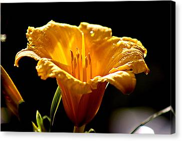 After The Rain Flower 1 Canvas Print by Mark Russell
