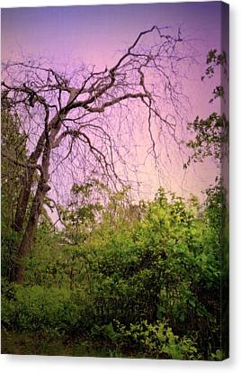 Canvas Print featuring the photograph After The Rain by Jim Whalen