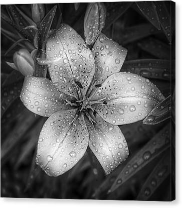 Raindrop Canvas Print - After The Rain by Scott Norris