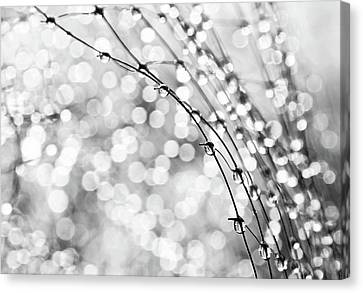 Water Drops Canvas Print - After The Rain by Theresa Tahara