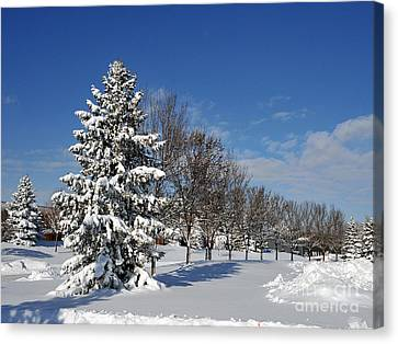 After The Snow 2 Canvas Print by Graham Taylor