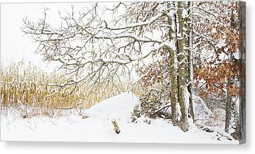 Barbara Smith Canvas Print - After The Snow Storm by Barbara Smith