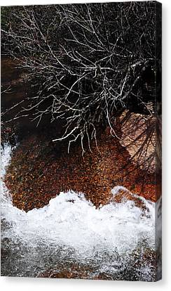 After The Thaw Canvas Print by The Forests Edge Photography - Diane Sandoval