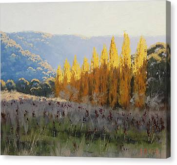 Afternoon Autumn Light Canvas Print by Graham Gercken