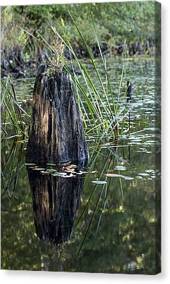 Canvas Print featuring the photograph Afternoon Light by Andrew Pacheco