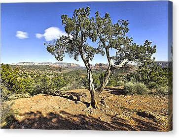Canvas Print featuring the photograph Afternoon Light In Sedona Arizona by James Steele