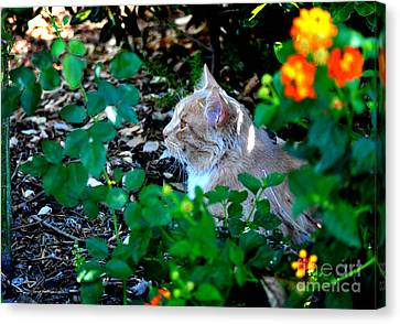 Afternoon Nap Interrupted Canvas Print