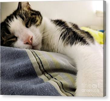 Canvas Print featuring the photograph Afternoon Nap by Robyn King