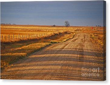 Afternoon Shadows Canvas Print