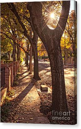 Afternoon Walk Canvas Print