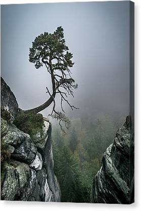 Bonsai Canvas Print - Against The Odds by Andreas Wonisch