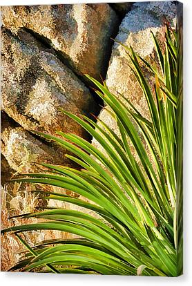 Against The Rocks Canvas Print by Scott Campbell