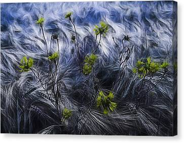 Cornfield Canvas Print - Against The Wind by Joachim G Pinkawa