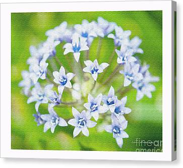 Agapantha Purple Flowers Canvas Print by Artist and Photographer Laura Wrede